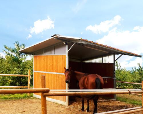 capannina cavalli
