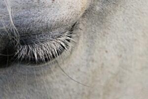 capannina facebook cavallo